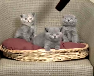 bank_kittens.png