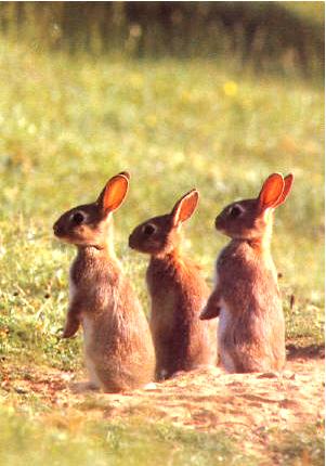 bunnyrabbits.png
