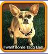 tacobelldog.png
