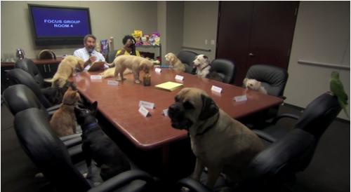 BSMedia63-Pet Focus Group