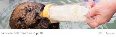 Otter Pup 631