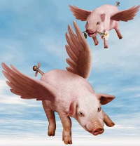 Pigs-Flying