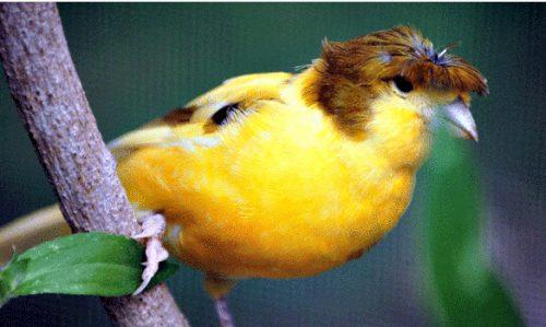 trumpbird