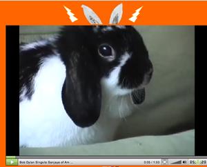 dylan_rabbits%20copy.png