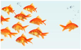 linchpinFish.png