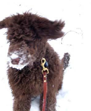 snow_dog1_01_17_12.jpg